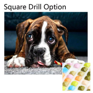 5D Diamond Painting Boxer Dog