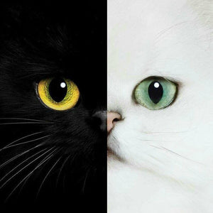 5D Diamond Painting Black and White Cat Face