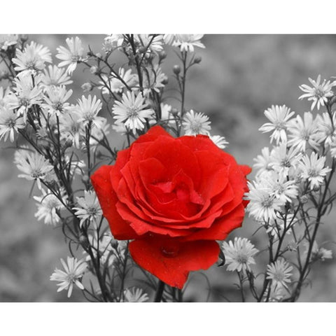 Image of 5D Diamond Painting Outstanding Red Flower
