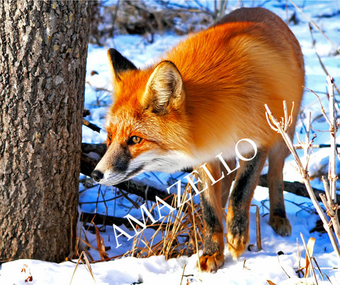 5D Diamond Painting The Fox