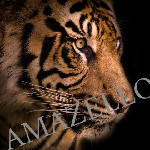 Image of 5D Diamond Painting Tiger Profile