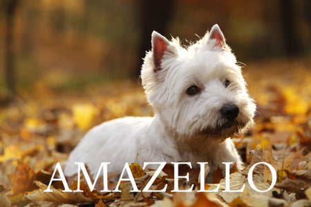 5D Diamond Painting Westie in the Fall ** Round Drills**