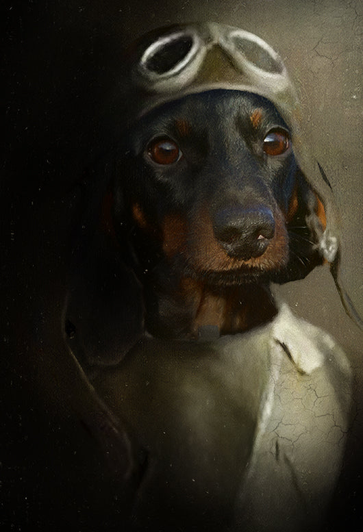 The Aviator Pet Portrait at Turner & Walker