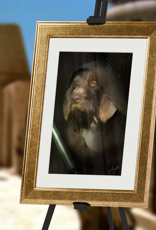 Jedi Pet Portrait at Turner & Walker