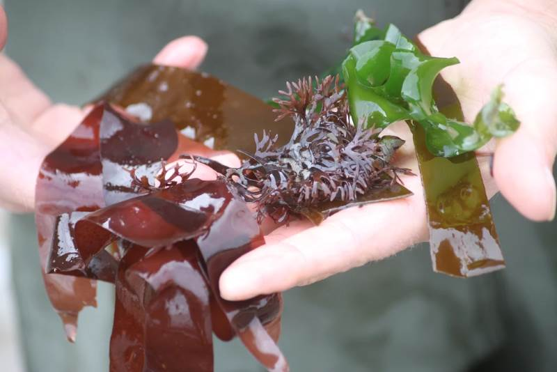 Seven reasons to dive into seaweed