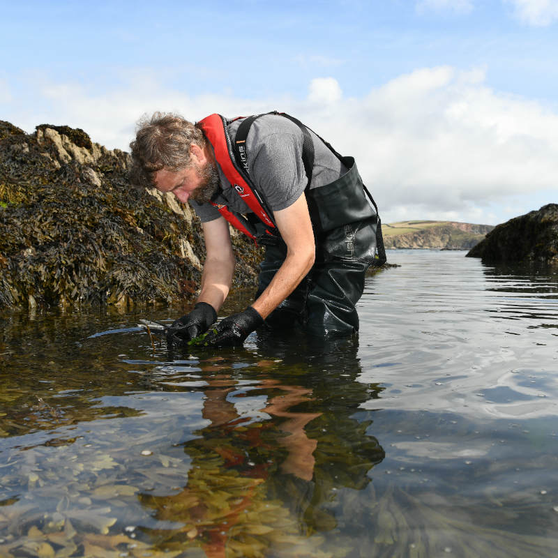 Edible Seaweed - a potted guide to some of the best