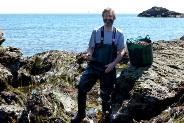 Harvesting seaweed by hand in Devon