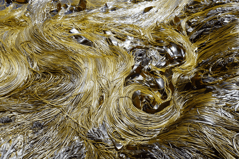 sea spaghetti - Seaspoon edible seaweed blends