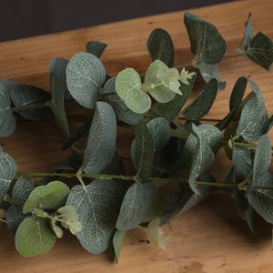 Eucalyptus Spray