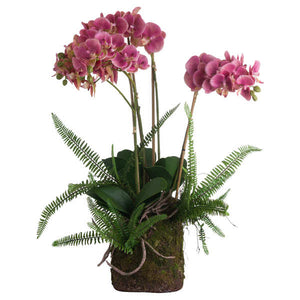 Large Pink Orchid