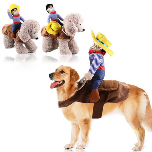 Funny dog costume rodeo rider