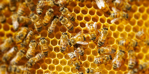 Honeycomb cells with honeybees