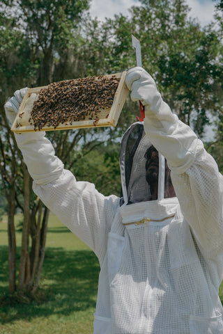 Beekeeper inspecting frame of honey and bees