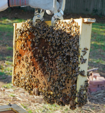 Inspecting a beehive