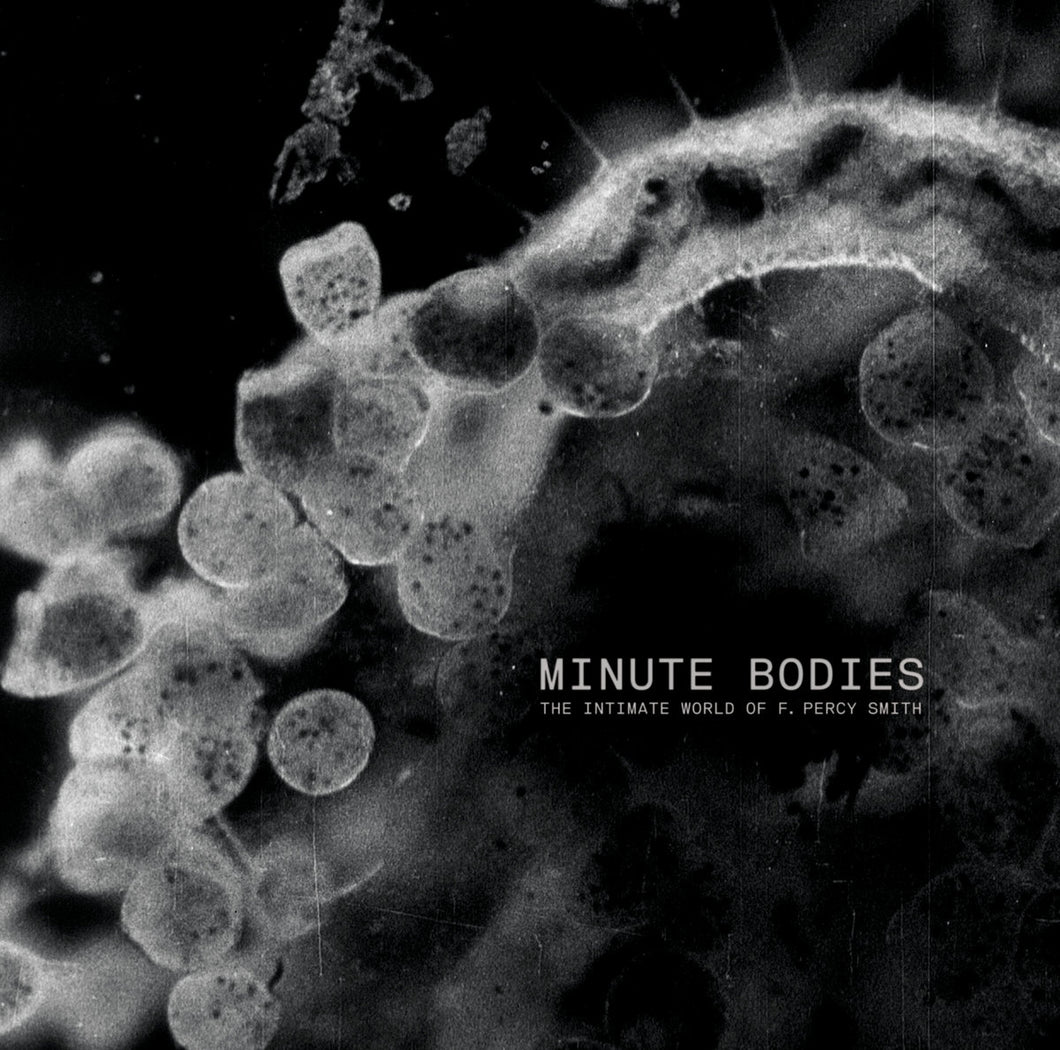 Minute Bodies CD/DVD