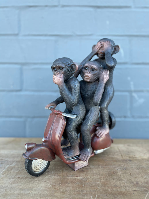 Monkeys on Scooter 🛵
