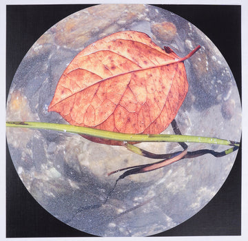 Frank Brockman 'Autumn Leaf In View'