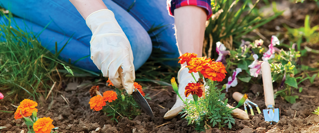 7 Tips for Gardening Without Pain