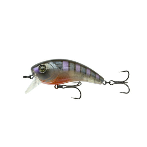 Movement 80X - Bluegill Spawn