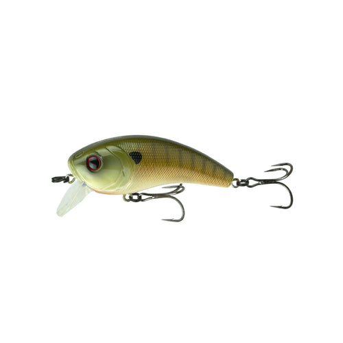 Movement 80X - Live Baby Bluegill