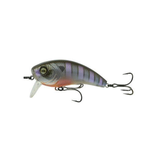 Movement 80WK - Bluegill Spawn