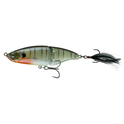 Speed Glide 100 - Bluegill Spawn