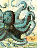 B501 Boxed seaside cards - Octopus