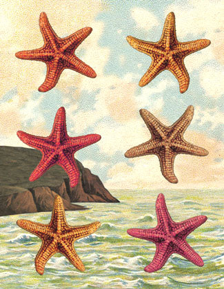 B502 Boxed seaside cards - Starfish