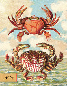 SB503 Single seaside card - Two Crabs