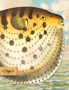SB504 Single seaside card - Puffer Fish