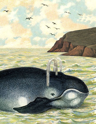 SB506 Single seaside card  - Whale