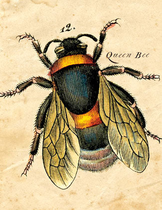 CC601 Queen Bee