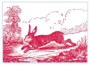 M115 Mini card - Rabbit