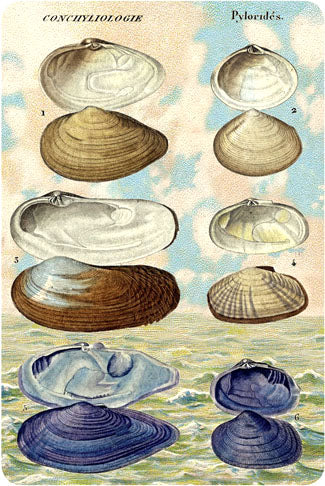 P106 Seaside postcards - Clams