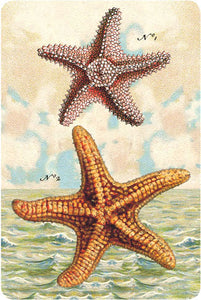 P108 Seaside postcards - Starfish