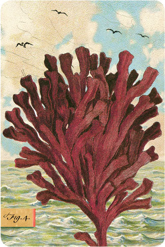P109 Seaside postcards - Kelp