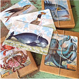 B509 Boxed seaside cards - Kelp