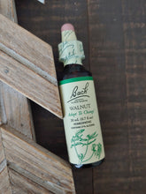 Walnut Flower Essence ll Bach Flower Remedies - SimplyGinger