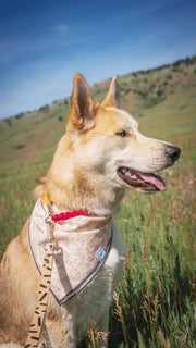 EXCLUSIVE Arrow Dog Bandana, Bandanas, Luck of Tuck, - Winnie Lou - The Canine Company