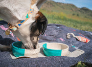 Terrazzo Dog Collar in Aqua, Collars, Nice Digs, - Winnie Lou - The Canine Company
