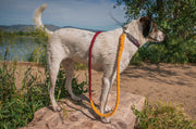 12mm Rope Leash in Claret/Yellow, Leashes, Jolly Hound, - Winnie Lou - The Canine Company