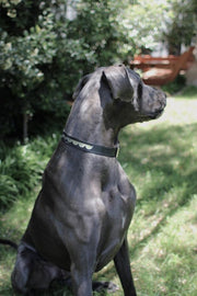 Leather Dog Collar in Black Silver Moon, Collars, Benji & Moon, - Winnie Lou - The Canine Company