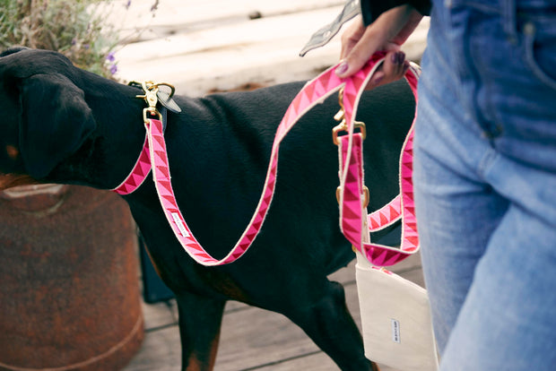 Nice Grill Leash in Ruby & Hot Pink, Leashes, See Scout Sleep, - Winnie Lou - The Canine Company
