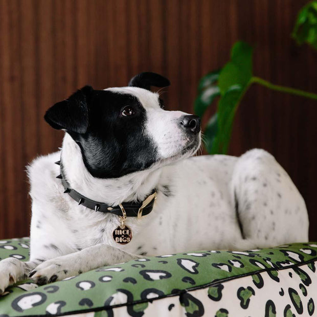 Spike Collar in Black Noir, Collars, Nice Digs, - Winnie Lou - The Canine Company