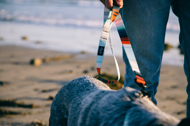 Birmingham Dog Leash, Leashes, Leed's, - Winnie Lou - The Canine Company