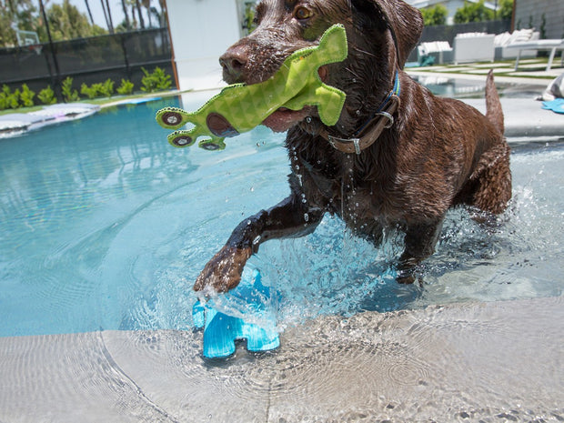 Float Toy for Tough Chewers- Zeus the Alien, Play, Jax & Bones, - Winnie Lou - The Canine Company