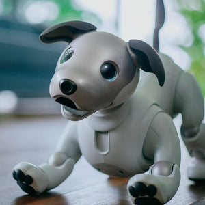 Robotic Dogs: the Future of Companion Robots