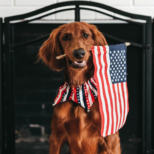 7 Tips to keep your dog safe on the 4th of July