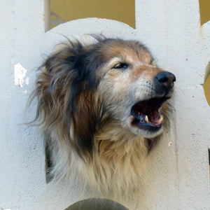 Why Having Laws for Nuisance Dog Barking is Needed