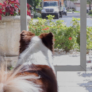 OnGuard: Stop Barking at the Front Door